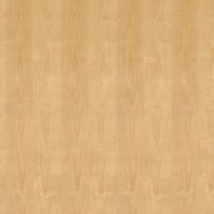 Birch White Plain Slice - Meteek Supply